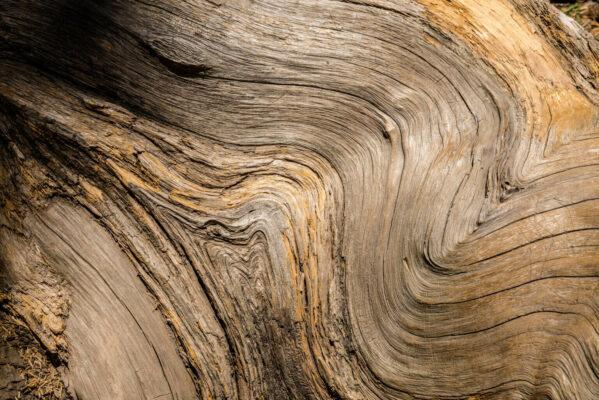 Maserung des Holzes